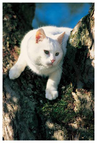 chat blanc sur un arbre walmart canada. Black Bedroom Furniture Sets. Home Design Ideas