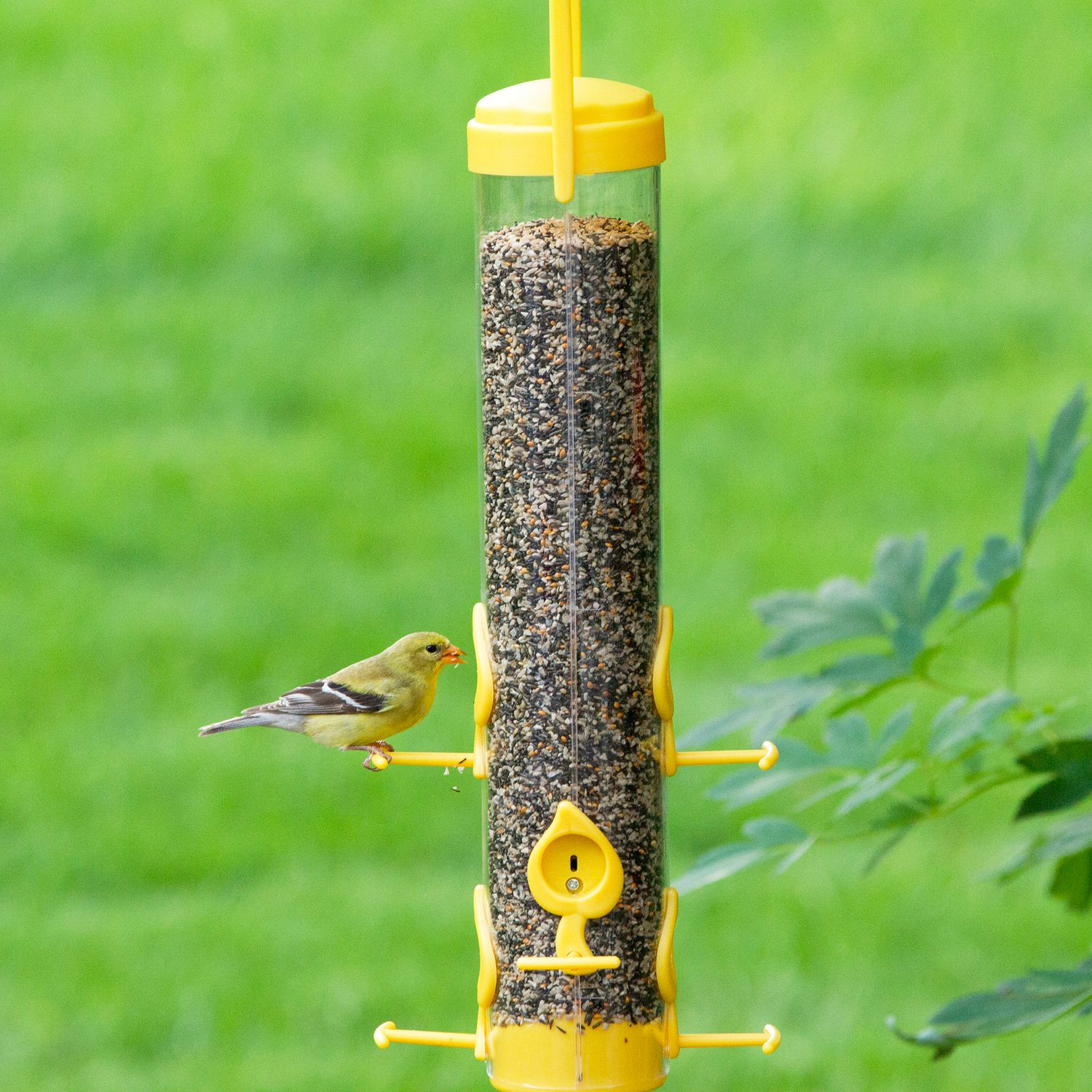 sunflower all feeders bird peters finch by finches feeder purpose wild
