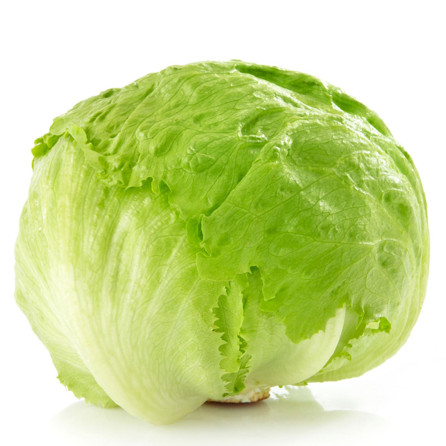Image of Lettuce Ice berg