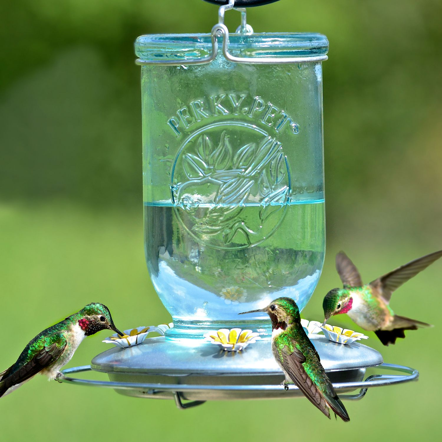 com glass feeder humingbird antique hummingbird zoom clear duncraft