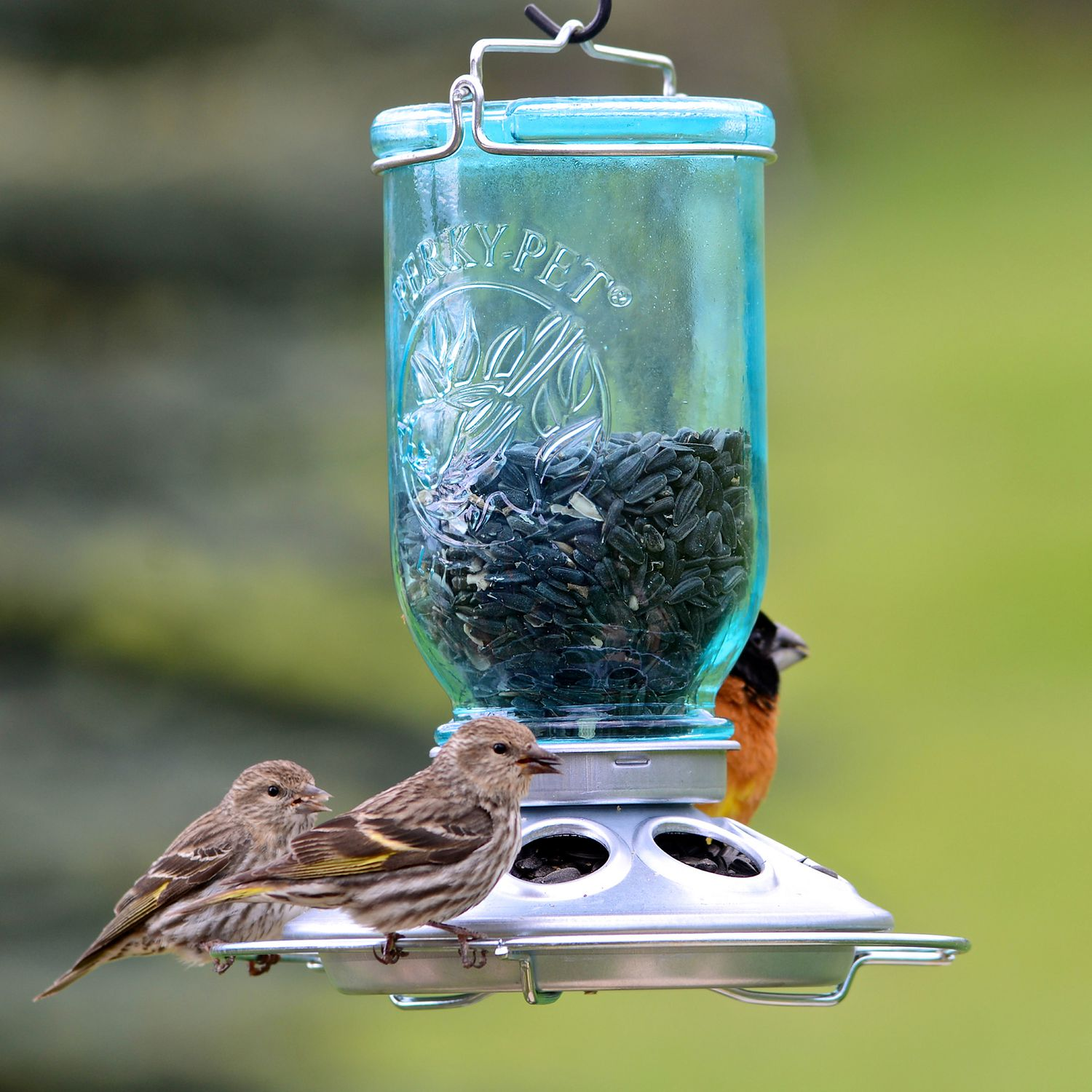 small fauna photo photography sun bird animal feeding garden images feed food nature close aviary wildlife feeder eat blue world free jungle tit watch beautiful feeders en