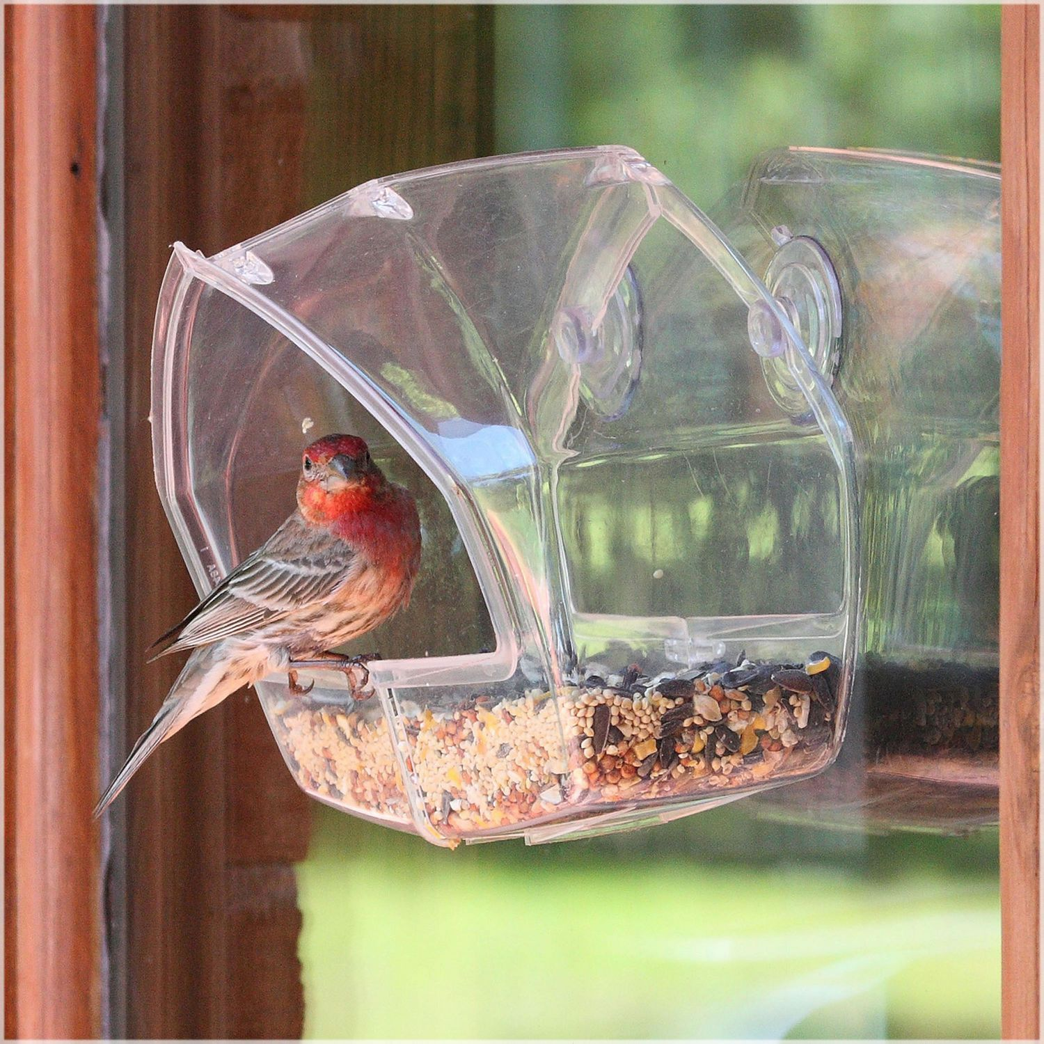 feeders beloved conservation feeder product blue book bluebird and bird the charismatic