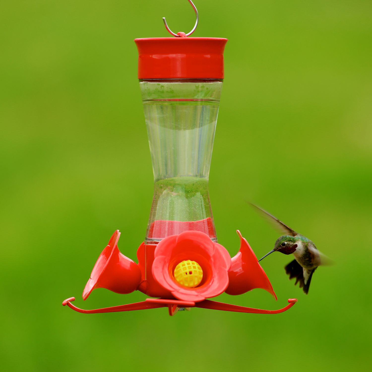 pet hummingbird humingbird com strawberry plastic us model feeder perkypet bf perky