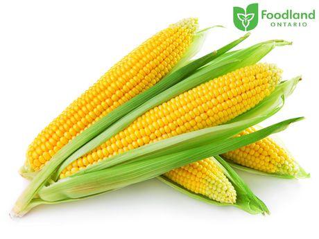 Corn - image 1 of 1