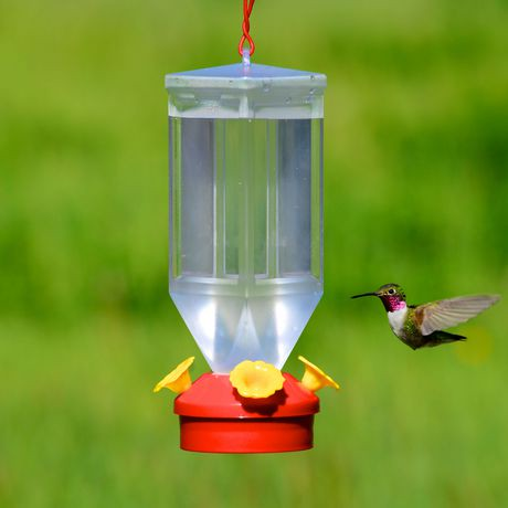 hummzinger hummingbird feeder humming asp image urban highview bird nature oz aspects