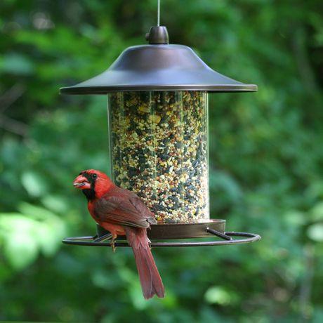 amazon perky feeder wild ca patio lawn bird pet in garden dp