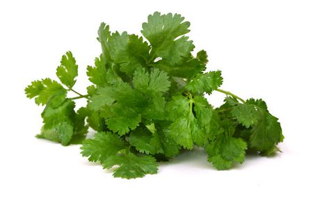 Seeds are Easy-Cilantro Herb - image 2 of 2