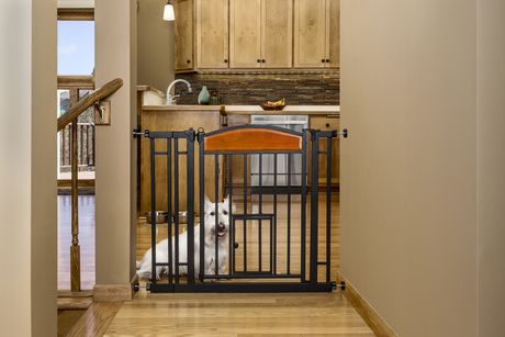 Carlson Pet Products Design Studio Home Decor Walk through Pet Gate on paper art and design, beauty and design, apparel and design, sewing and design, photography and design, jewelry and design, hardware and design, living room furniture and design, furnishing and design, remodeling and design, western interiors and design, floral and design, home staging and design, home trends and design, tools and design, kitchen and design, bathroom and design, travel and design, entertainment and design, frames and design,