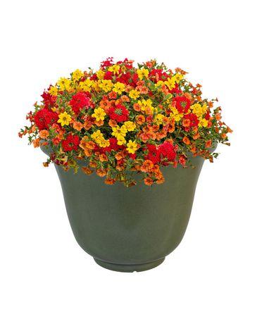 Decorative Planter - image 2 of 2