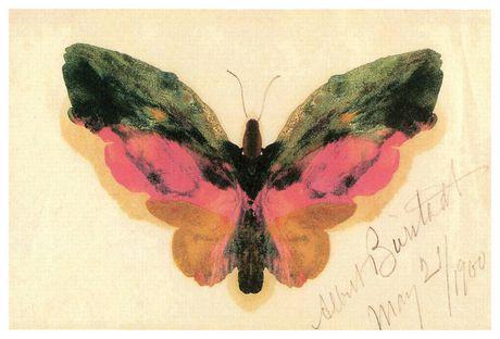 Bierstadt - Papillon - image 1 de 1