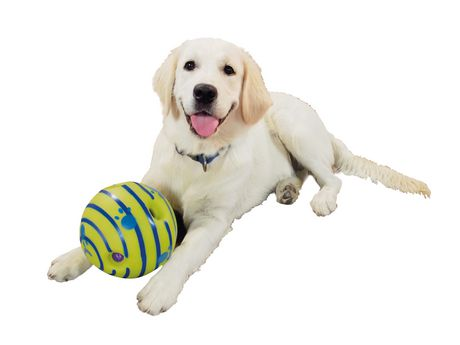 Jouet Wobble Wag Giggle - convient à toutes les tailles de chien - image 2 de 2