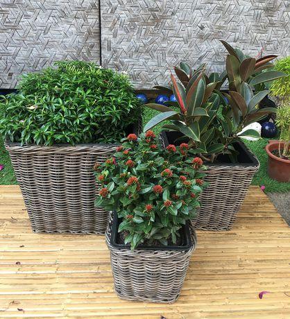 Grapevine Premier Square Resin Wicker Neutral Grey  Planters - image 3 of 5