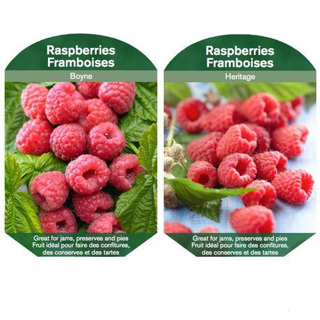 les bulbes, c'est facile Plante Fruitière - Framboise Assortment - image 1 de 6
