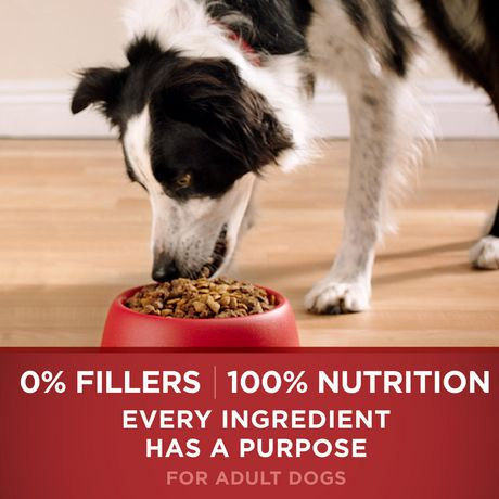 Purina ONE SmartBlend Natural Dry Dog Food; Chicken & Rice Formula - image 6 of 9