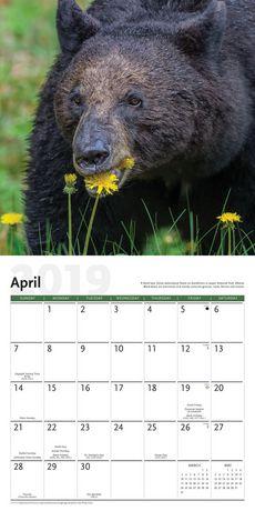 2019 Bears Calendar - image 3 of 3