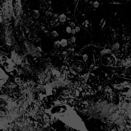 Primitive Man/Unearthly Trance - Split - image 1 of 1