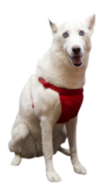 Large/X-Large Comfort Harness