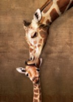 Giraffe Mother's Kiss - 6000-0301