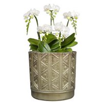 "hometrends 8"" Deco X Cylinder Ceramic Planter"