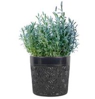 "hometrends 8"" Geotex Metal Ceramic Planter"