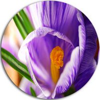 Design Art Blooming Crocus Flower' Ultra Glossy Floral Metal Circle Wall Art 29in x 29in